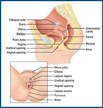 picture elder sexual woman organs
