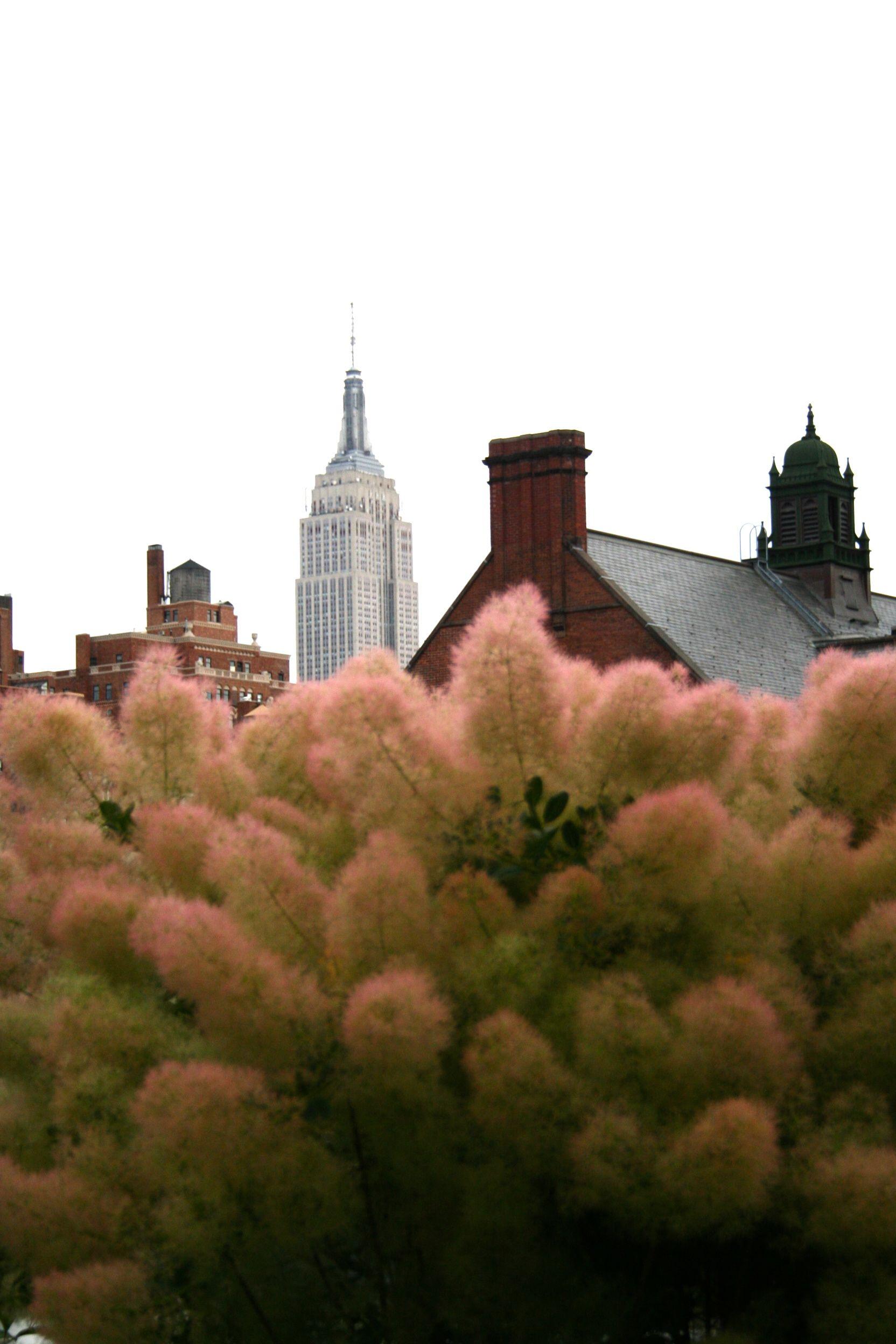 The High Line... Cotinus \'Grace\'   GARDENS   Pinterest   Gardens ...
