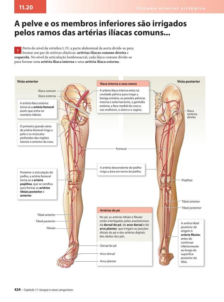 Großartig Iliaca Externa Ideen - Anatomie Ideen - finotti.info