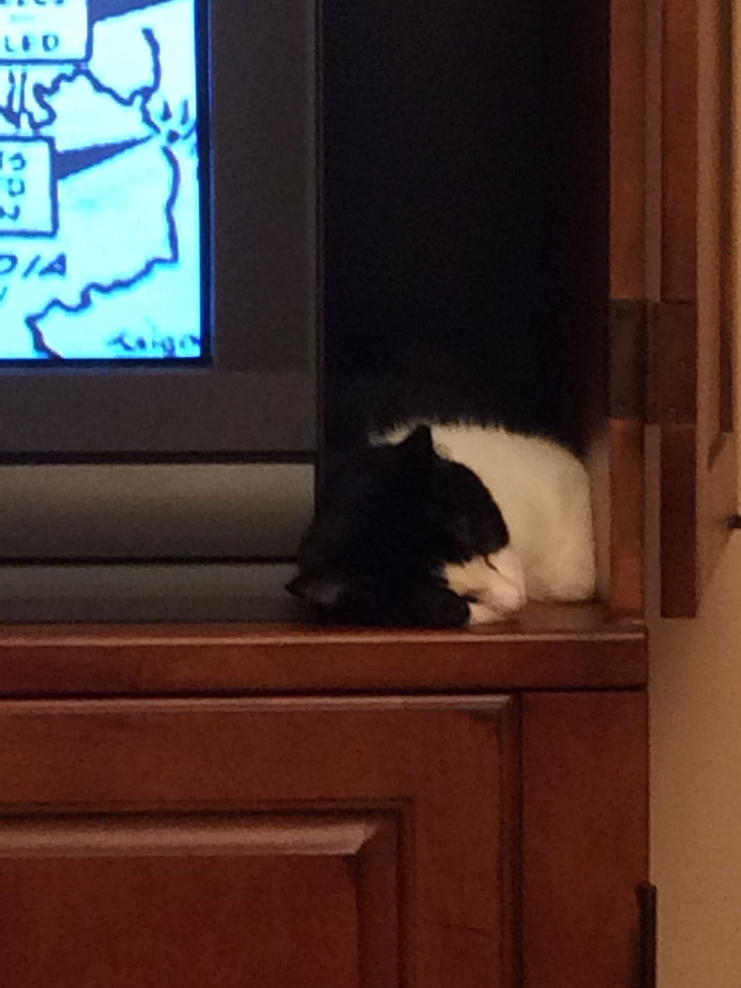 Etonnant Watching Television Makes Bailey A Fine Cat So Very Tired.