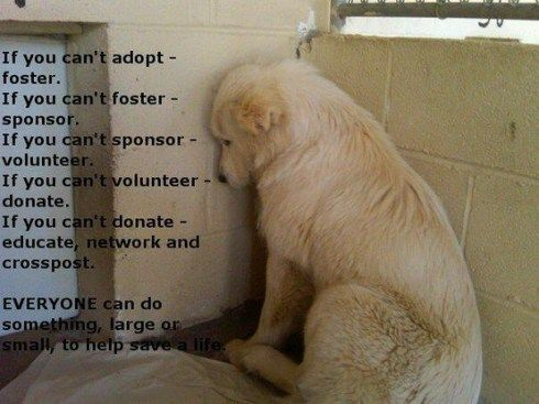 Help the pups in shelters...we can each do something.