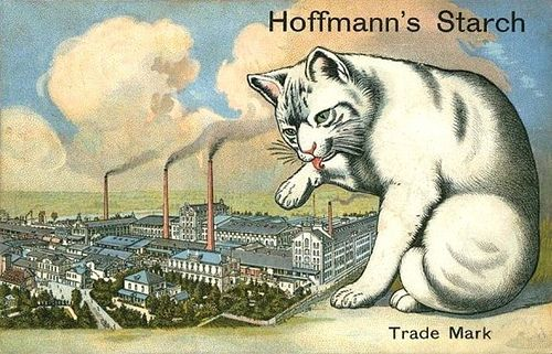 Cats in Art, Illustration and Advertising: Hoffman's Starch vintage trade card
