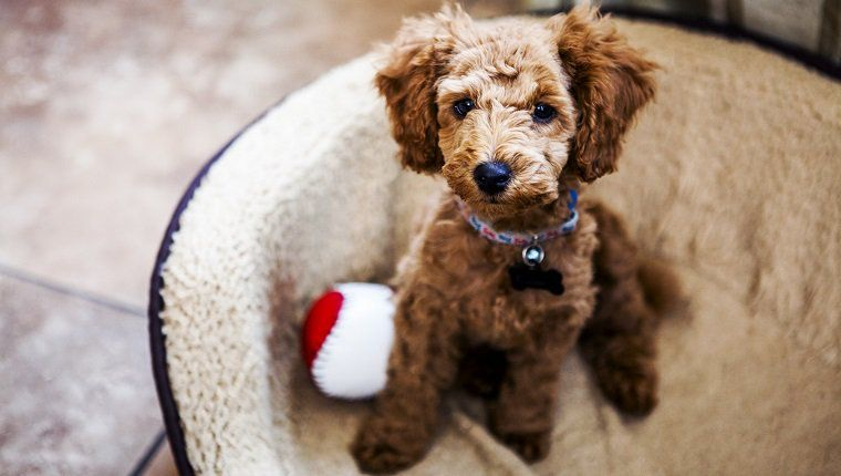Top 32 Small Breeds That Make Good Apartment Dogs Dogtime Best Dogs For Kids Dogs And Kids Pet Allergies
