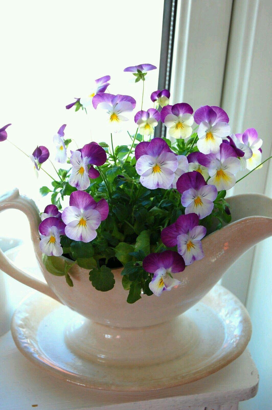 Пин от пользователя Vladimir Haikin на доске цветы | Цветы ...