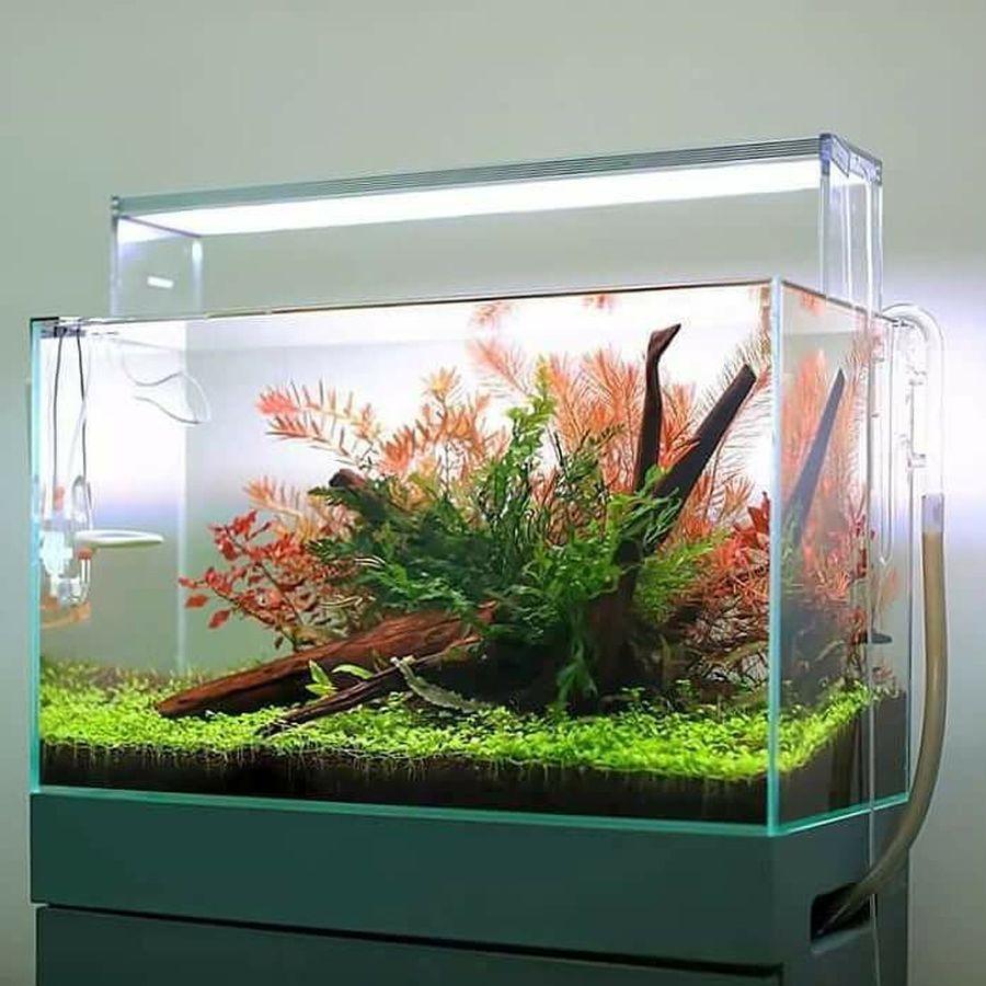 Amazing Aquascape Gallery Ideas That You Never Seen Before Aquascape Saltwater Aquarium Setup Tropical Fish Aquarium