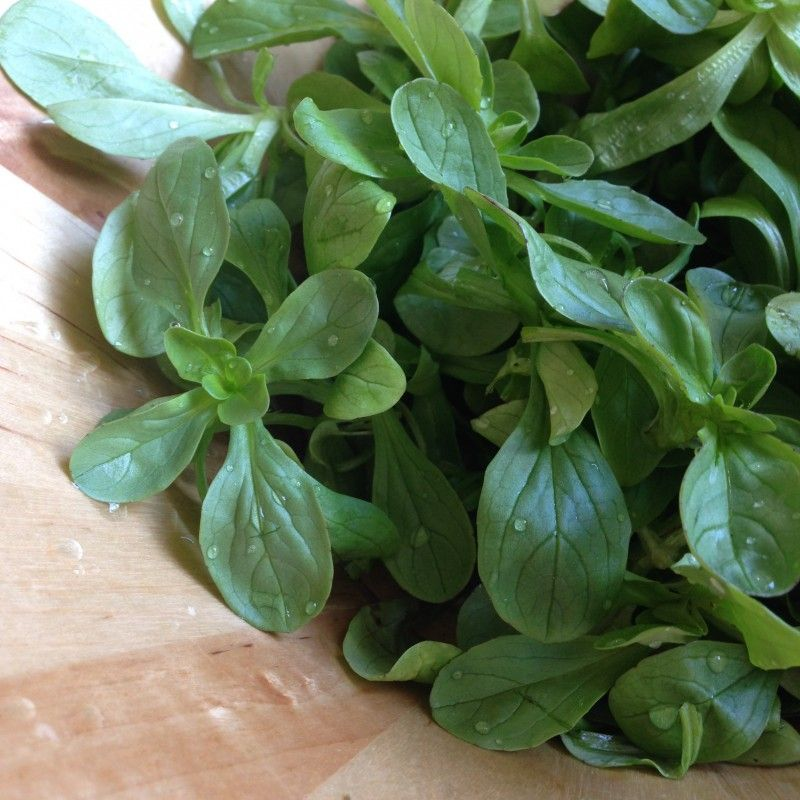 Cold Hardy Crops For The Fall Winter Vegetable Garden