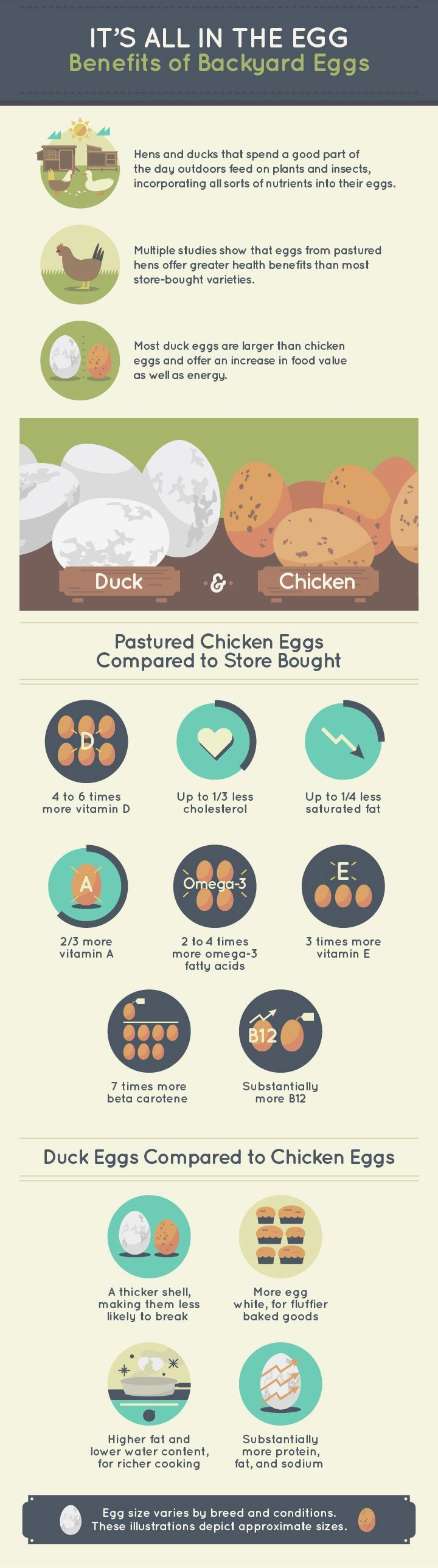 Raising Chickens and Ducks With Ingenuity and DIY Hacks ...