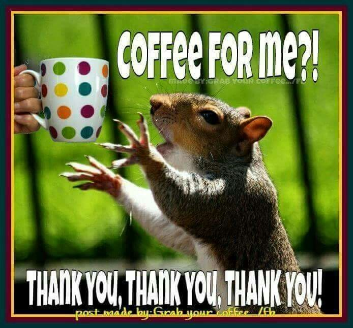 Squirrel meme coffee humor | Animals | Coffee barista