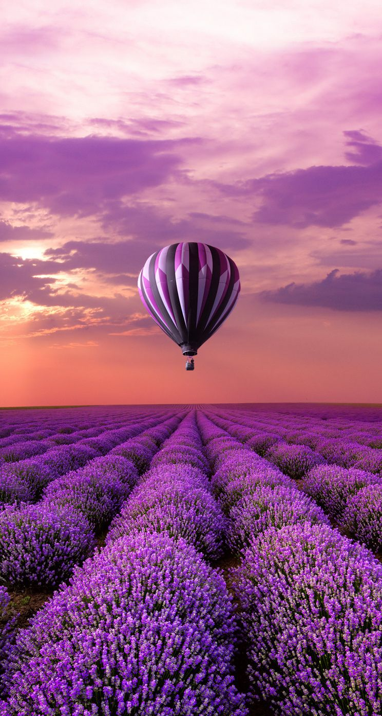 lavendel sunrises and sunsets pinterest lavender air balloon. Black Bedroom Furniture Sets. Home Design Ideas