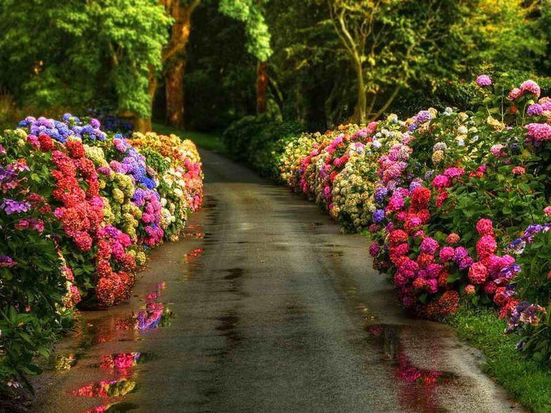 задумываемся создании красивые фотографии цветочных аллей этот