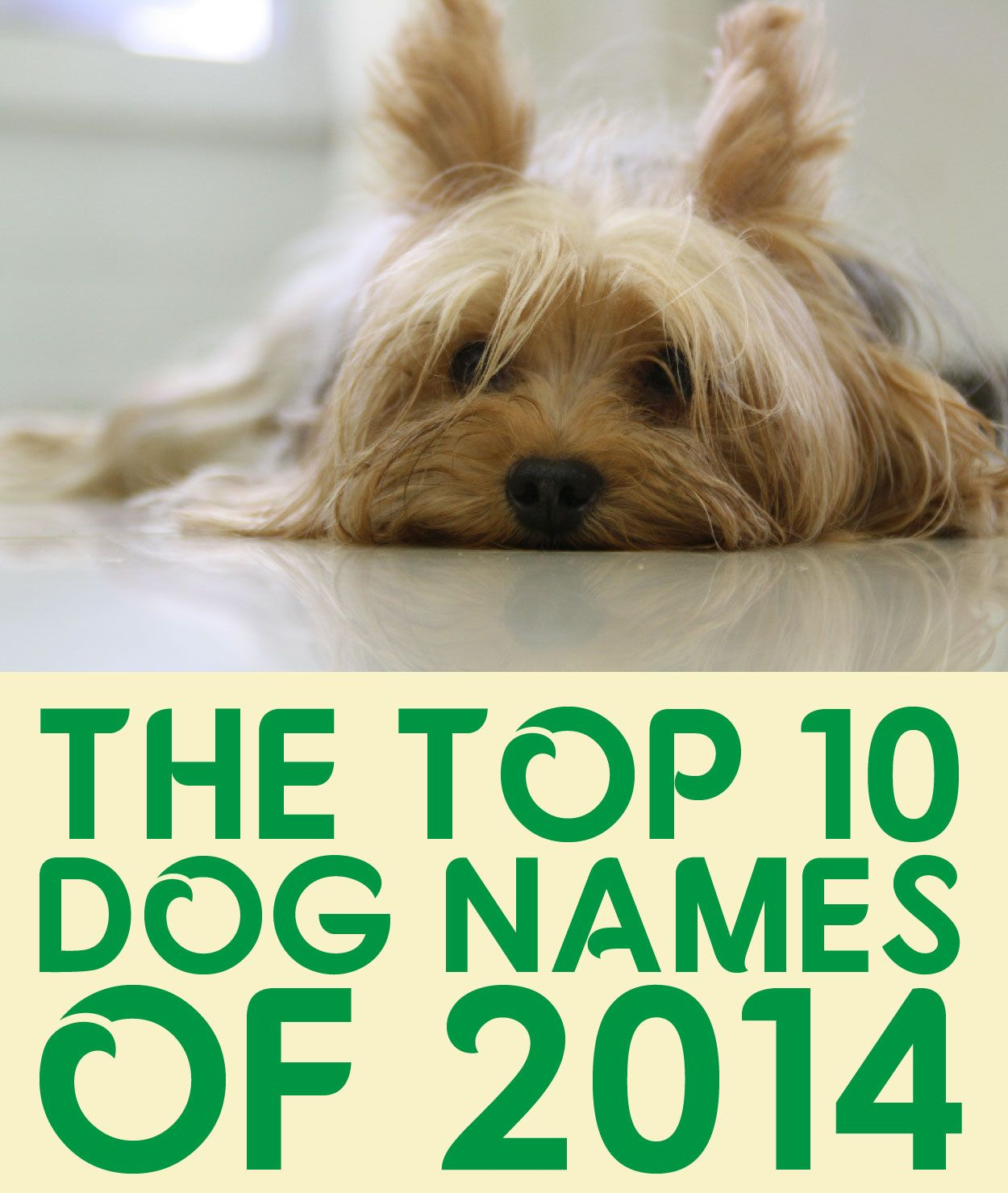 The Top 10 Dog Names of 2014 Dog names, Dogs, Yorkie names