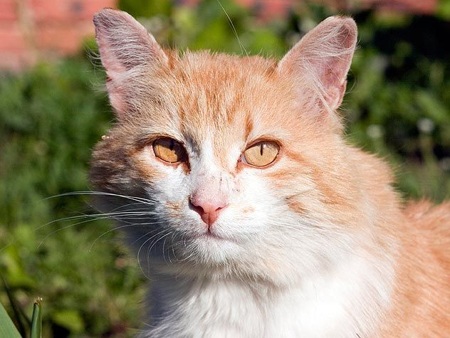 What a brown and white cat !!!! http://ift.tt/2rXOfAl