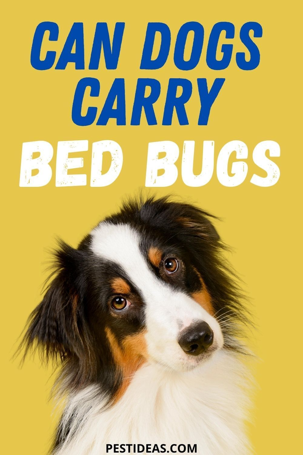 Can Dogs Carry Bed Bugs in 2020 Bed bugs, Bed bug dog