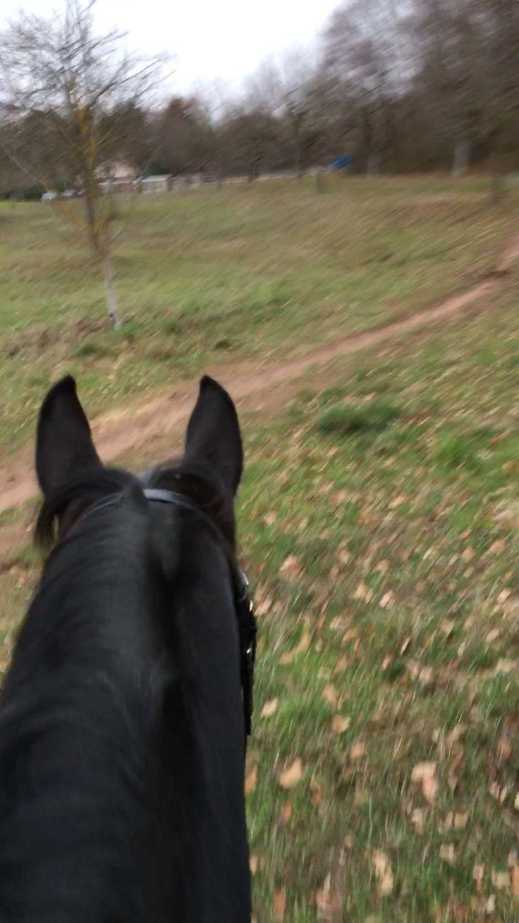 horse horses horsesofinstagram riding horseriding #equitation_ethologie #Horse #...,  #Equita...