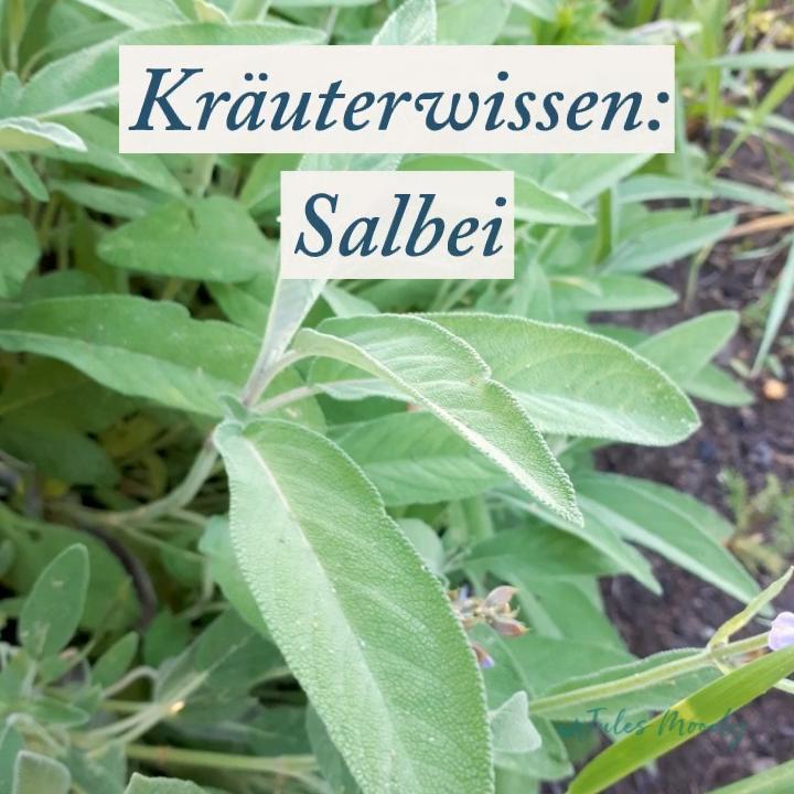 Salbei ist eine beliebte Heilpflanze  Wieso und was du damit anstellen kannst, erfährst du im Video und am Blog! Kräuterwissen Salbei Naturkosmeitk Naturheilkunde GrüneApotheke is part of Plants -