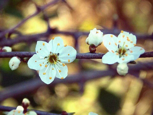 Spring colour #3   Blackthorn