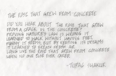 The Rose That Grew From Concrete Poem Tupac Tupac Quotes