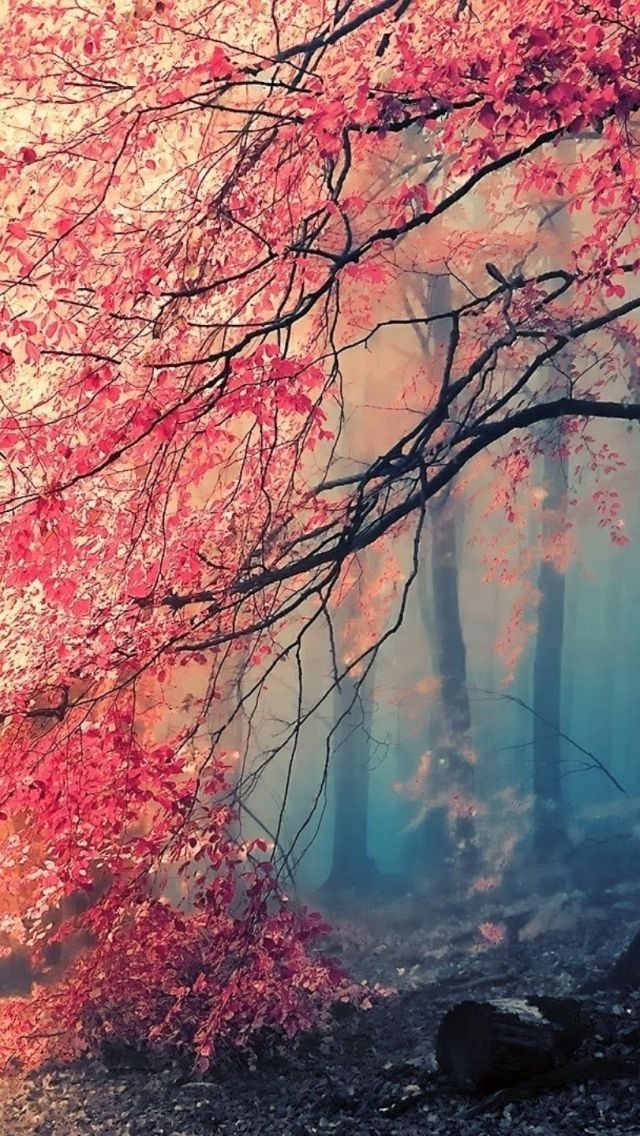 Download Wallpaper 640x1136 Tree Fog Nature Beautiful