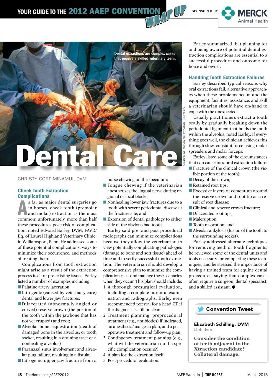 Equine Dental Care (AAEP Convention 2012) – The Horse #dentalcare