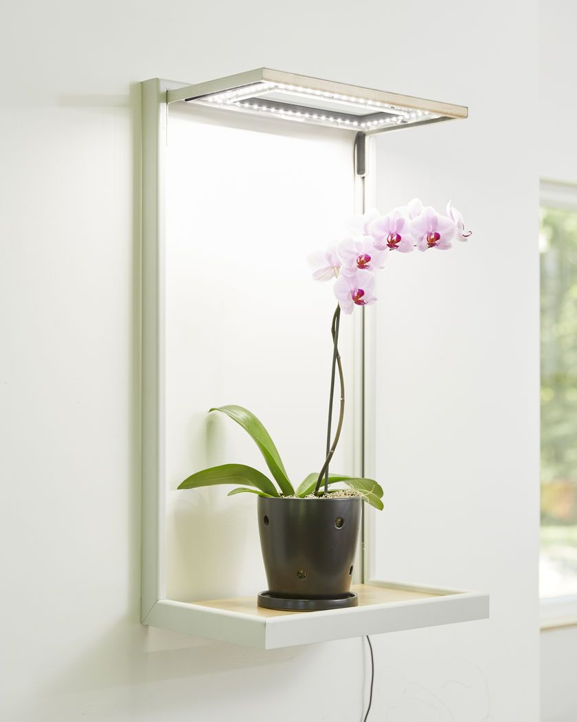 Grow light for houseplants - This Elegant Led Grow Light Is Adjustable And Can Be Mounted On A Wall Or Placed On A Table Ideal For Herbs Orchids Houseplants Or Seedlings