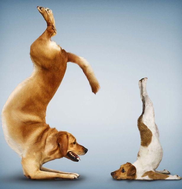 Для, позы йоги смешные картинки