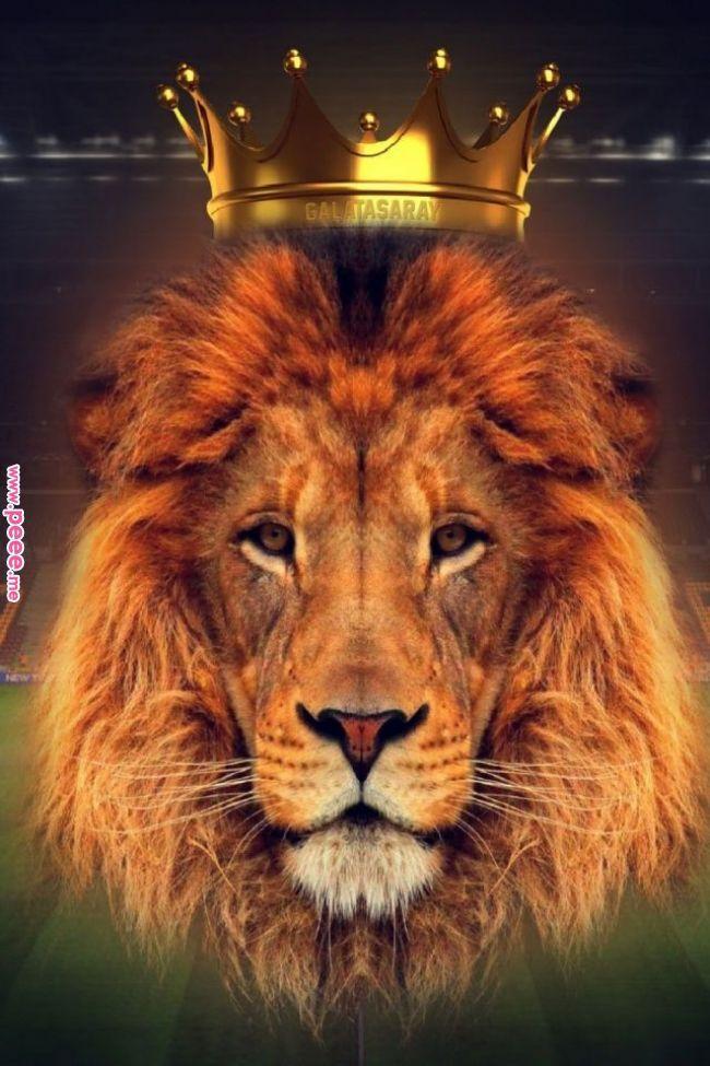 Картинка на обои лев в короне