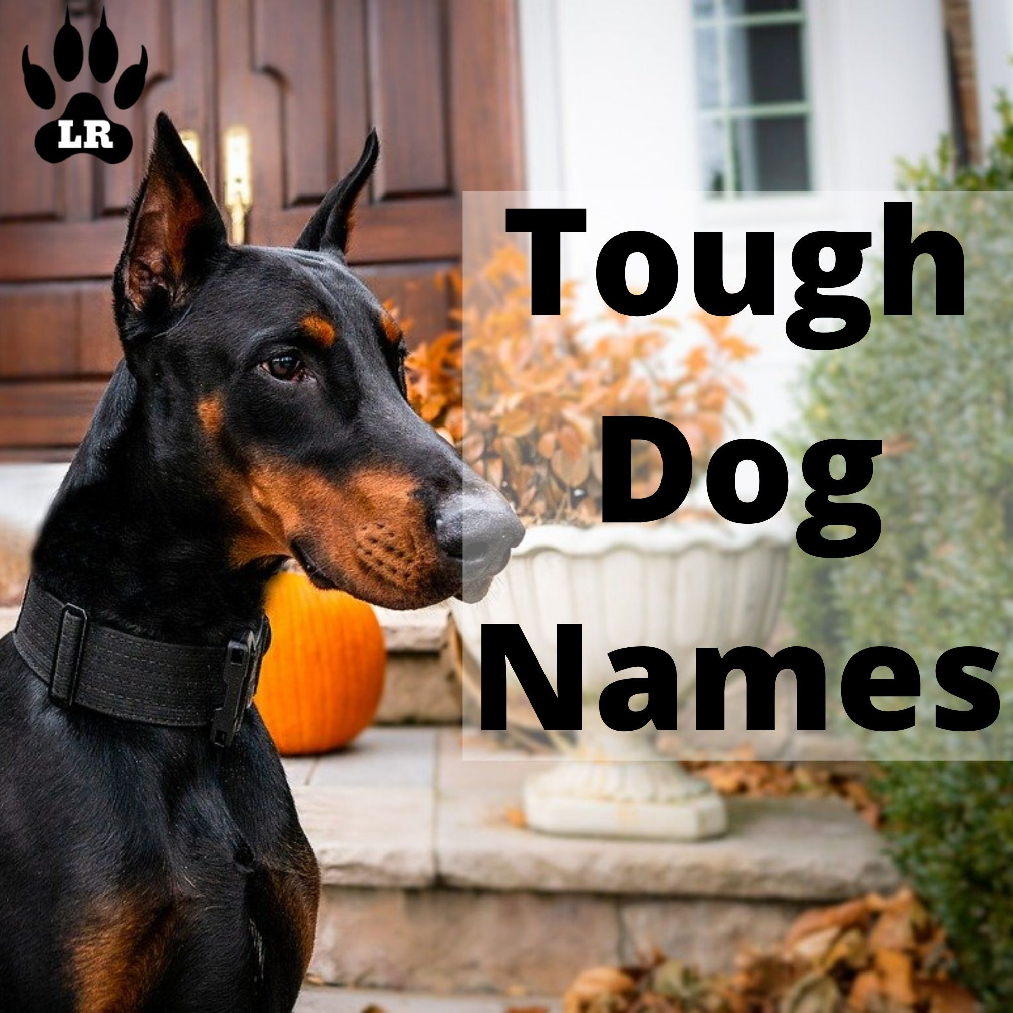 160 Tough Dog Names Labrottie Com In 2020 Tough Dog Names Dog Names Female Dog Names