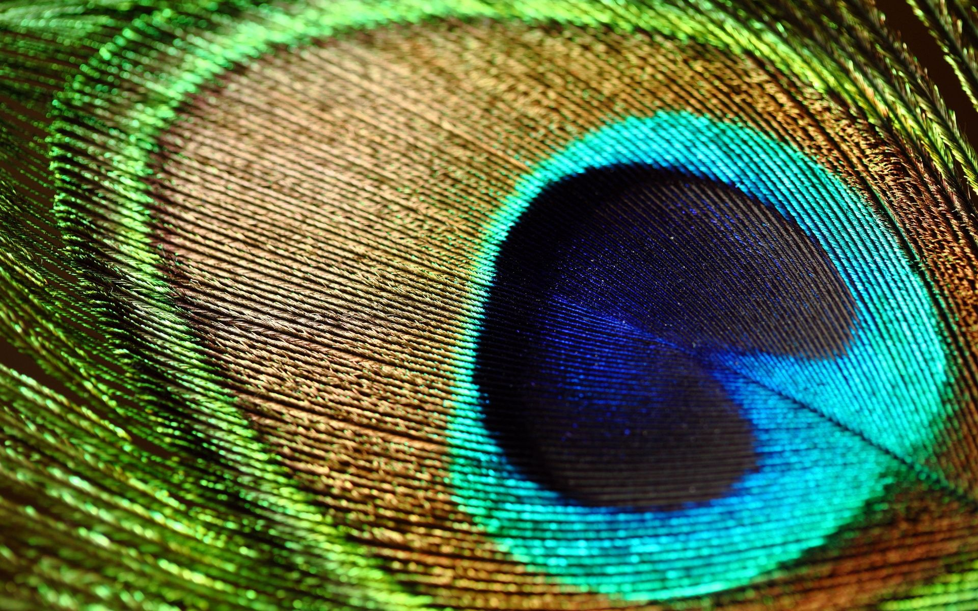 Ultra Hd Peacock Feather 1920 215 1200 Feather Wallpaper Peacock Pictures Peacock Wings