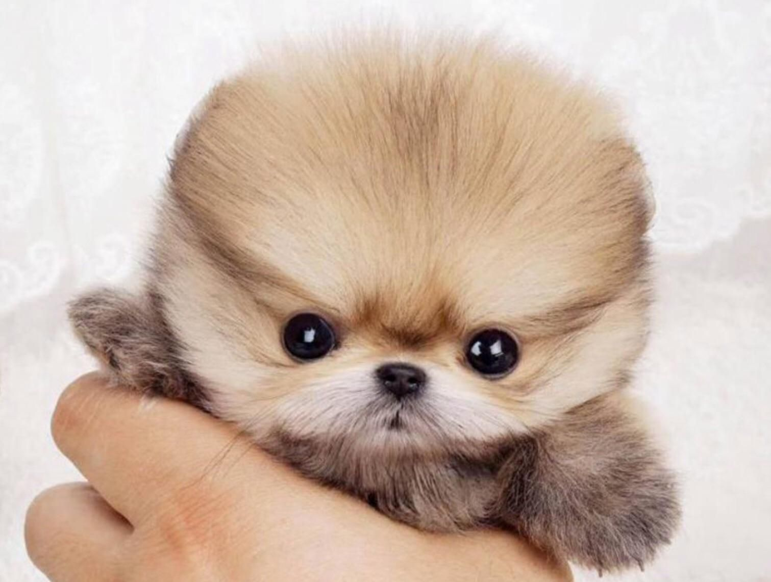 Pin By Nice On Small Dog Breeds Dog Breeds Small Dogs
