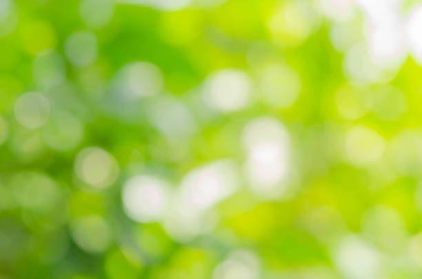 green leaf blurred background