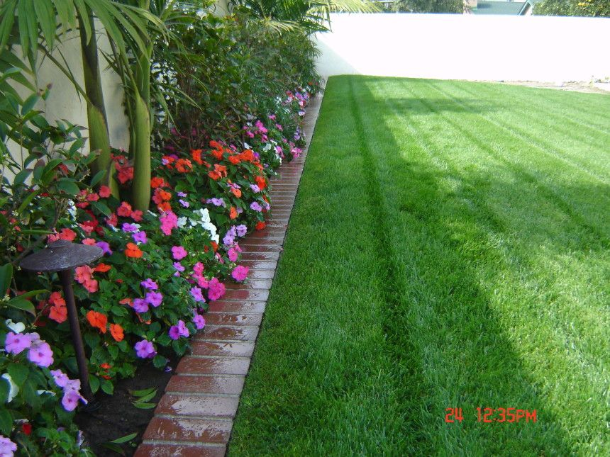 Palm Trees Landscaping | Tree Trimming San Diego, Landscaping And  Maintenance, Palm Trees