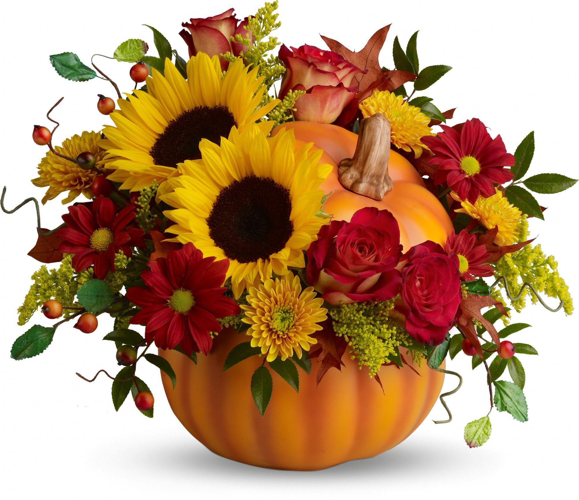 Pin by vero davila on beautiful flowers pinterest pumpkin flowers izmirmasajfo