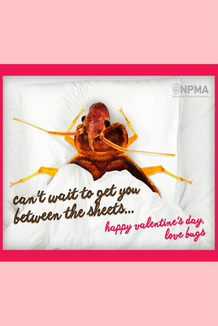 The One Thing You Definitely Don T Want In Your Bedroom On Valentine S Day Is A Bed Bug Click To Learn The Sig Signs Of Bed Bugs Bed Bugs Infestation Bed Bugs