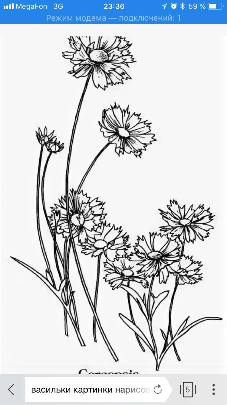 Картинка раскраска василек