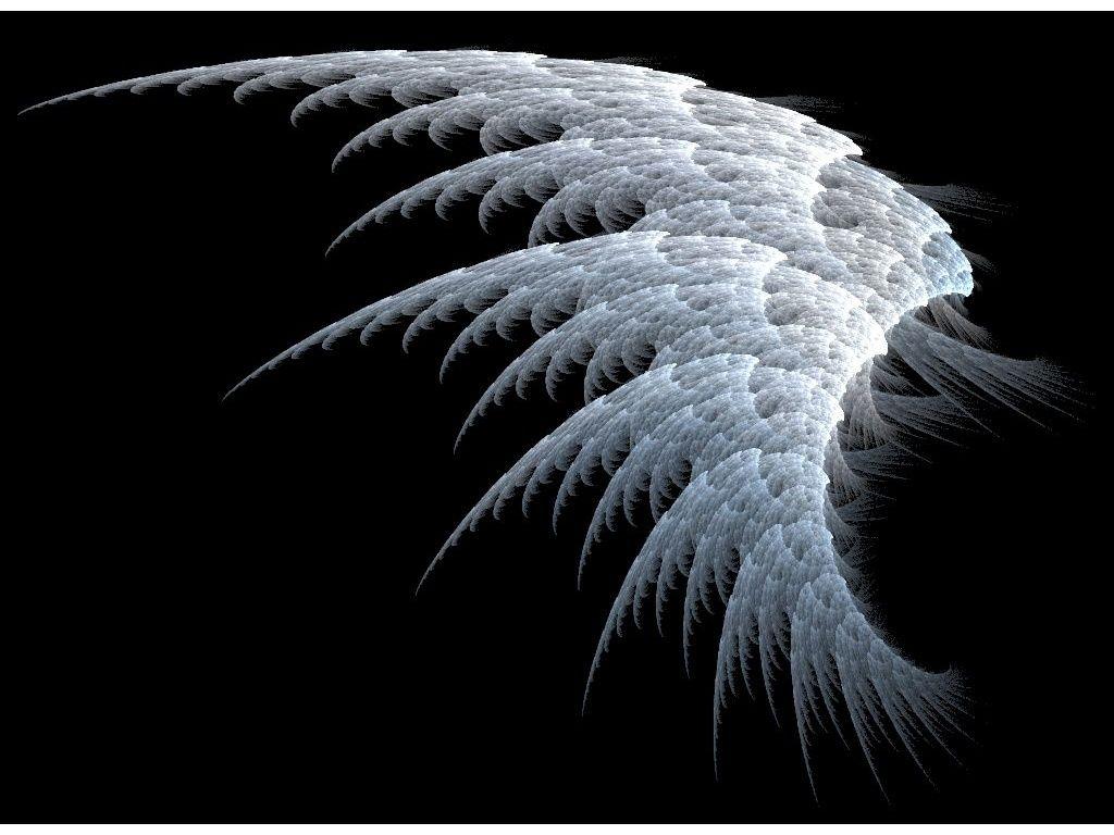 White angel wings wallpaper