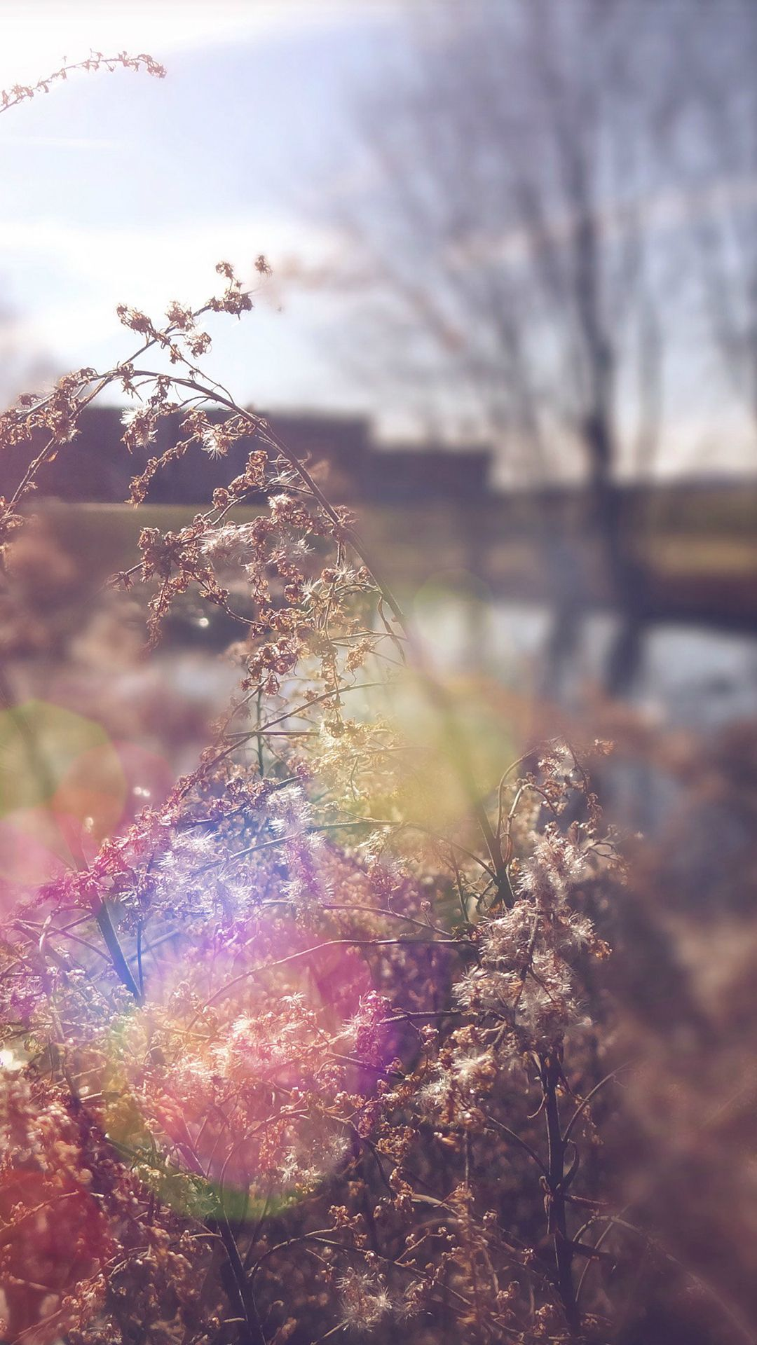 Sad Day Flower Nature Flare iPhone 7 wallpaper Best