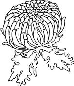 Red Zinnia Coloring Page Flower Coloring Pages Coloring Pages