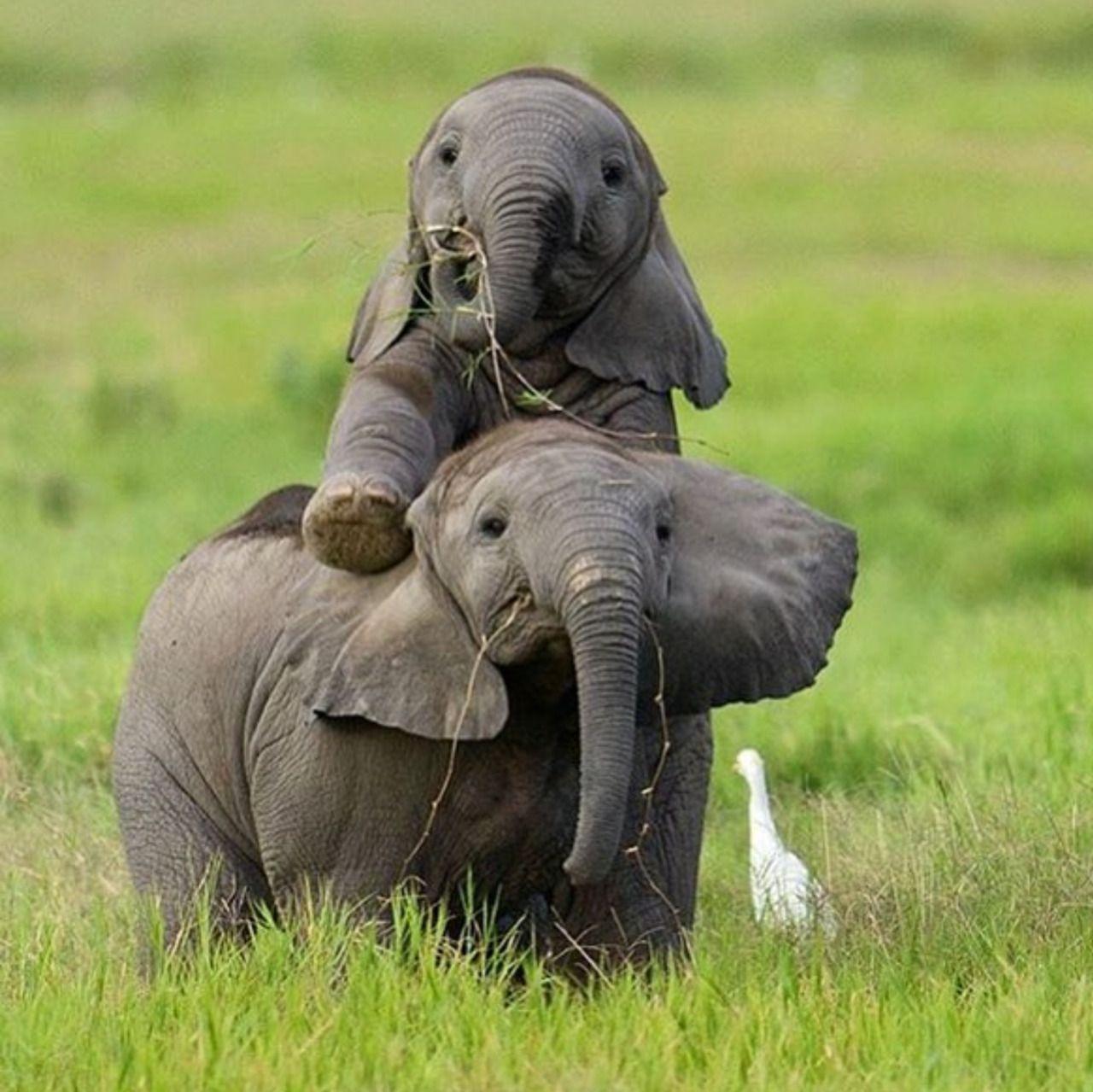 Доброго, картинки смешные со слонами
