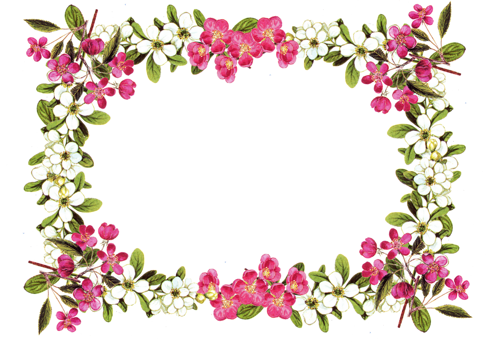 vintage flower frame / border png; free download; digital ...