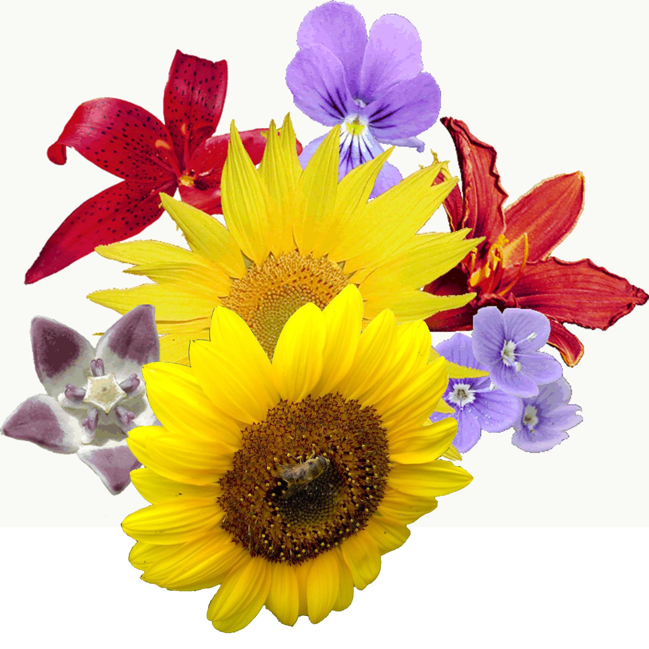 Bosje_bloemen.png (2124×2124)