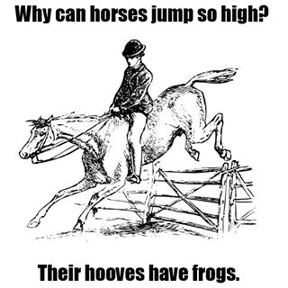 Horse humor?