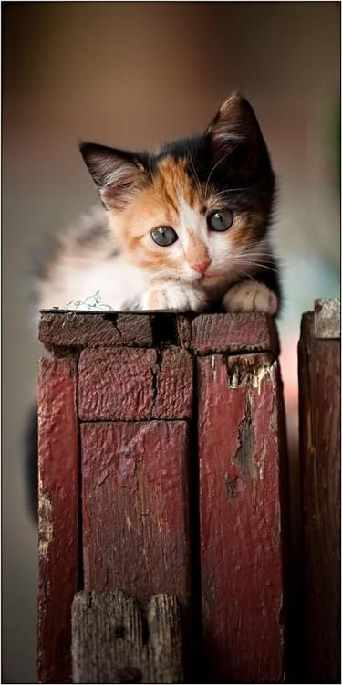"""para56: """"A kitten is in the animal world what a rosebud is in the garden."""""""