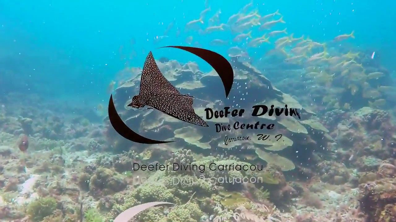 Discover Amazing Scuba Diving in 2020 Diving, Scuba