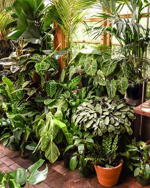 Whats Your Favorite Shade Of Green Plants Backyard 400 x 300