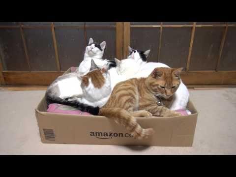(Video) - かご猫 x 箱と6匹の猫 Box and cat 2015#5 - http://bit.ly/1MscMPa