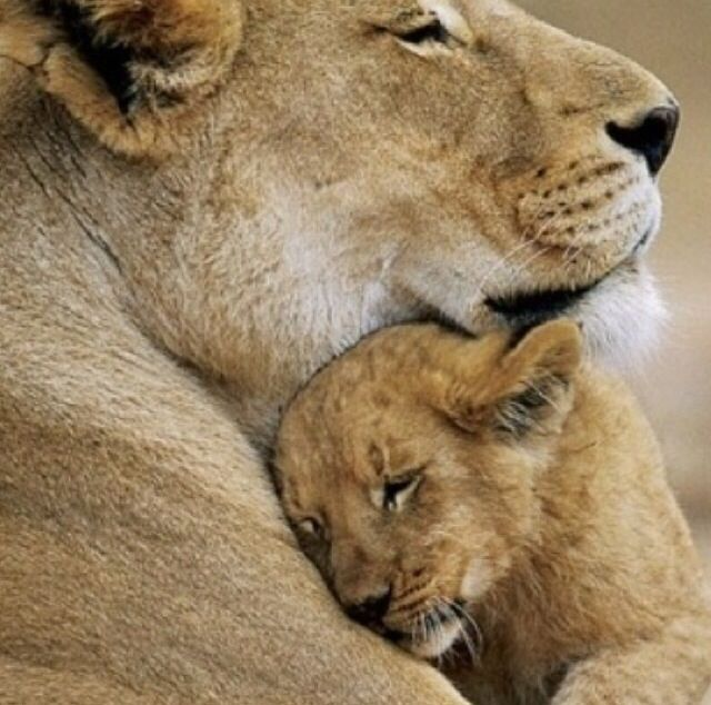 Mutterliebe ist überall gleich :-*