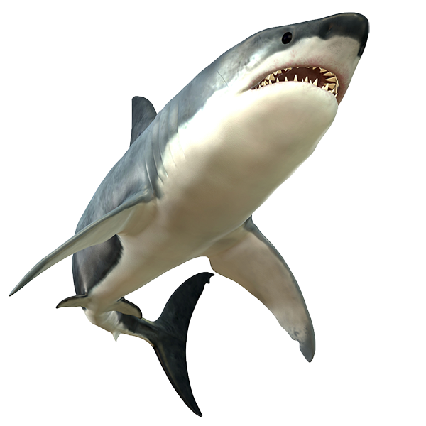 Touch A Live Shark!   #BucketList #Shark