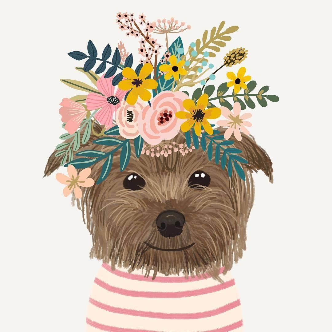 Новости | Иллюстрации, Милые рисунки и Рисунки животных