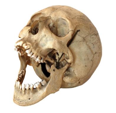 Https Www Google Es Blank Html Risovanie Golovy Vdohnovlyayushie Lichnosti Skelet