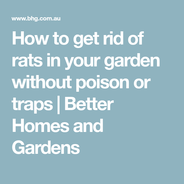 How to get rid of rats in your garden without poison or ...